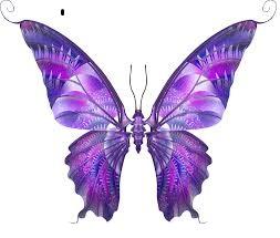 mariposa-lila-pada-suvir